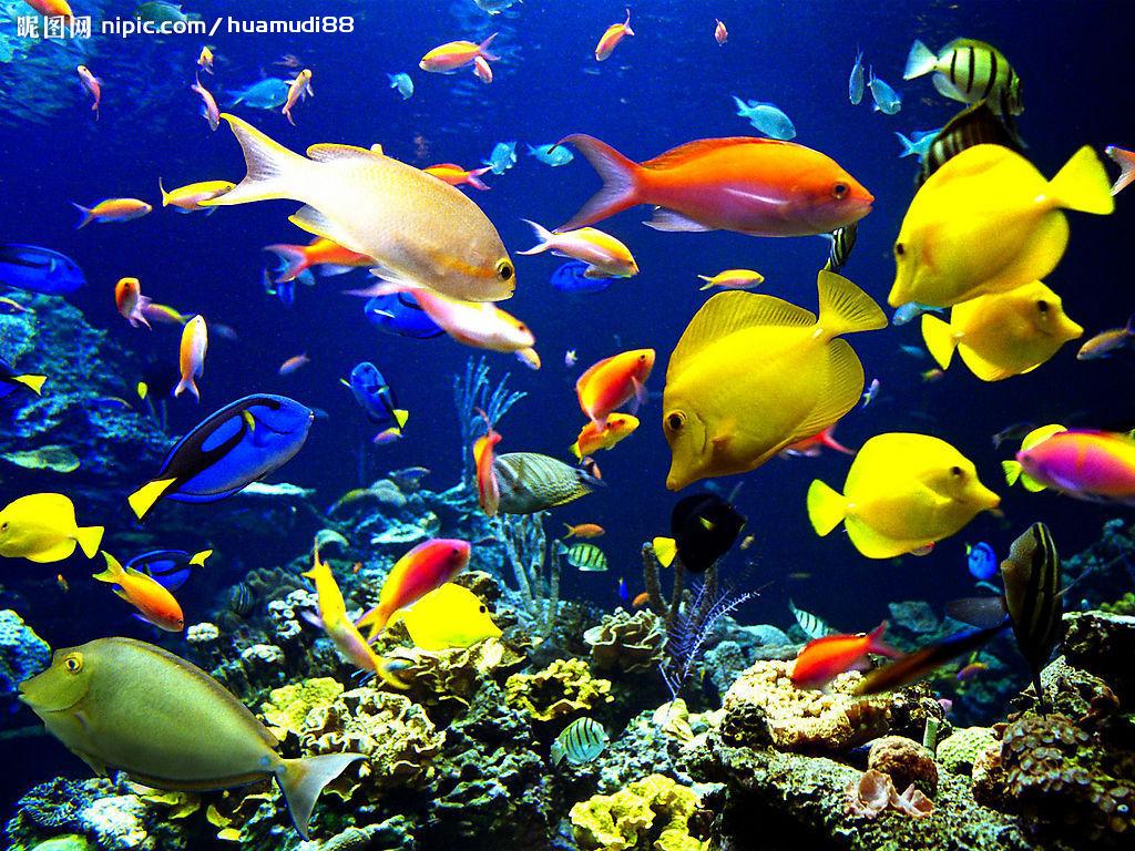 壁纸 海底世界 青岛/神奇美丽的南海海底世界// 动态资讯// 重磅专题/...