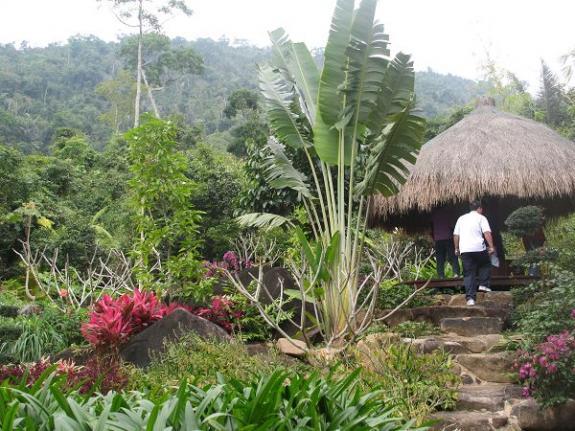 海南岛热带雨林_三亚热带雨林游记 -- 动态资讯 -- 重磅专题 -- 欢迎莅临海南旅游 ...