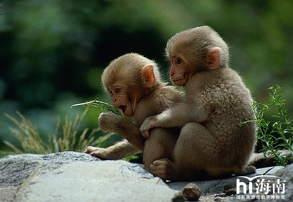 可怜可爱的小猴子